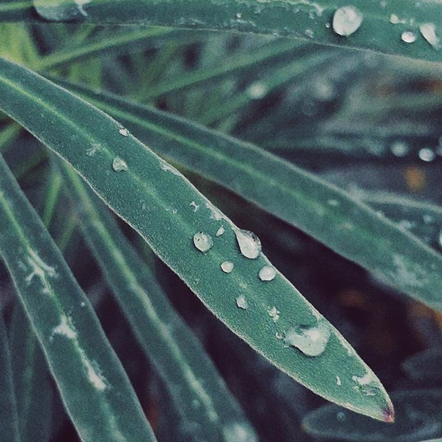 Garden walk closeup #1  ______ #VSCO #vscocam #nature #naturephotography #plants #garden #garden