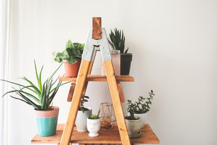 ladder-plant-shelf_4460x4460.jpg