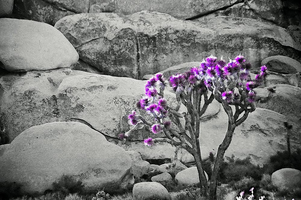 Purple Bloom.jpg