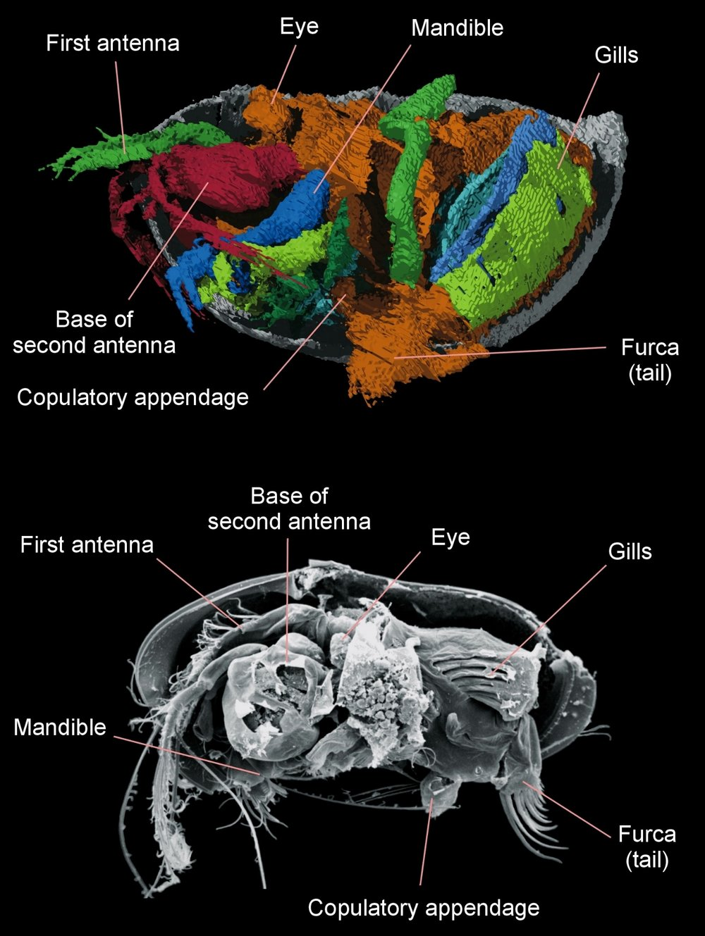 Siveter et al SCIENCE.jpg