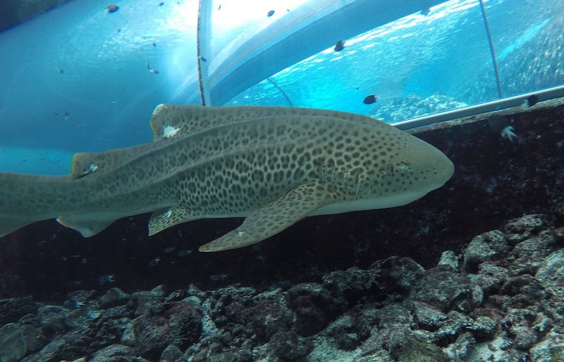 Photo credit: Reef Builders
