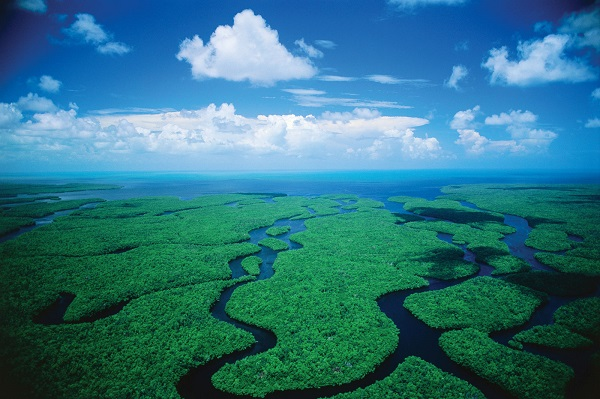 The Everglades National Park. Photo credit: National-Park.com