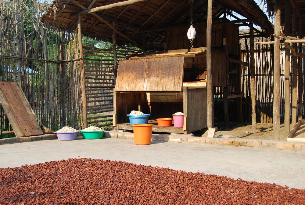 Colorful tubs of cocoa 2_Madecasse.JPG