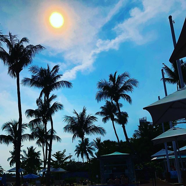 Don't waste a moment of #sunshine. Come on down to #Tan and #chill in our barside #pool. #mambobeachclubsg #sentosa #beachbar #beachlife.