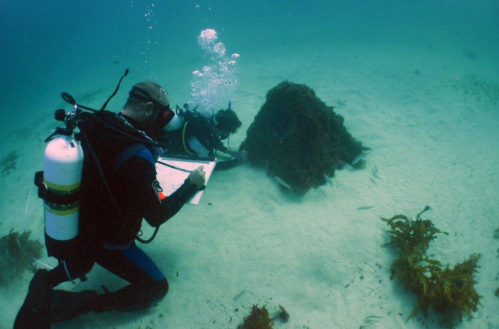 Shannon Reid recording underwater