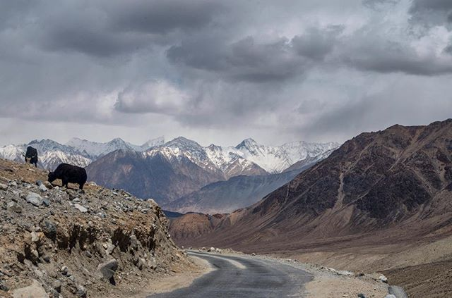 Weaving throughout this beautiful and diverse region are sometimes rough, sometimes pristine, high mountain roads.  #HighestRoad #YoungExplorer #NationalGeographic #Ladakh #Kargil #Himalayas #Leh #Adventure #Mountains #Jammu #Kashmir #NeverStopExploring #GetOutStayOut #Letsexplore #Natgeo #Natgeoexplorer #India #UnrulyDreamers #MSRGear #Thermaresting #Streetphotographyindia #Exploreindia