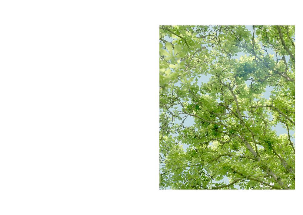 luke&nik_2017_r29_tree.jpg