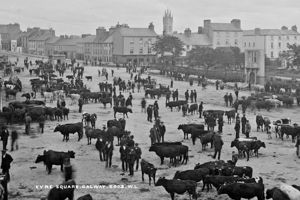 Cattle market in Galway's Eyre Square. The plot of land which became Eyre Square was presented to the city in 1710 by Mayor Edward Eyre
