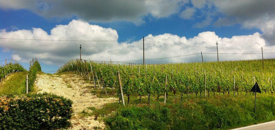Vigna Margherita (Az. Cascina Garitina), nella zona del Nizza