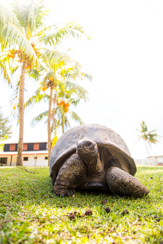 Praslin_Seychelles_136.jpg