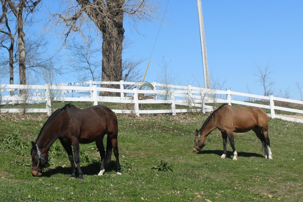 LT Horse 4.jpg