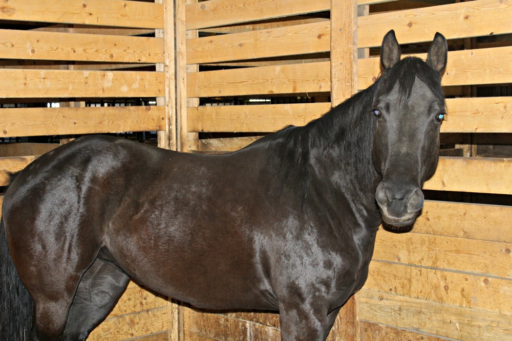 LT Horse 3.jpg