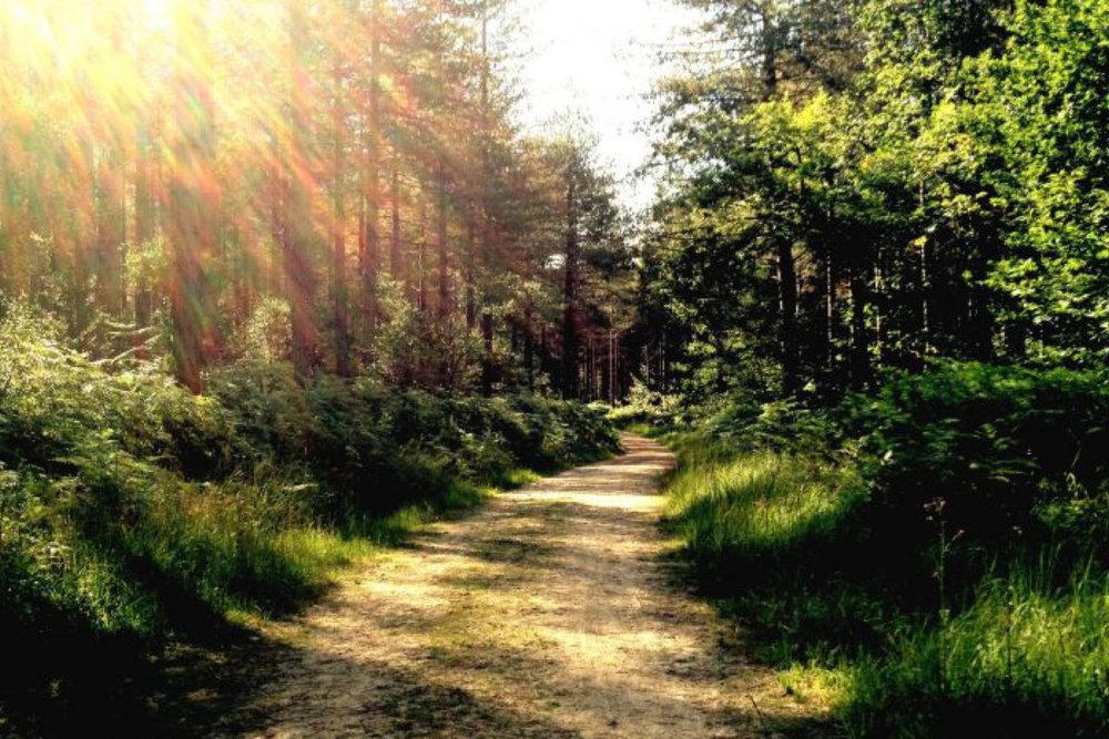 Instatera burn-out en stress coaching