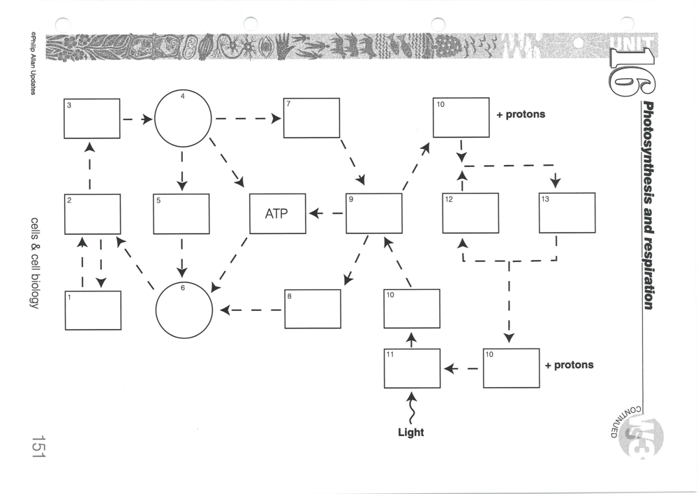 Linking Photosynthesis And Respiration A Wonderful Synoptic