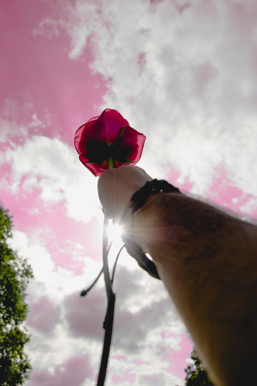 Rose to the sky 1.jpg