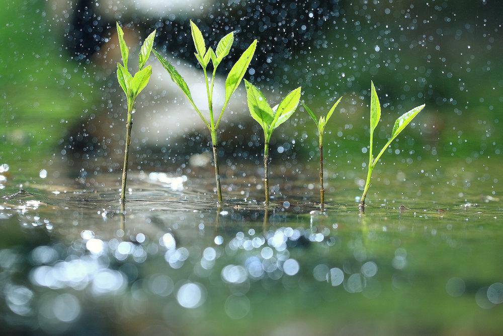 Landscape Design Ideas for a Gorgeous Rain Garden in Glen Cove, NY
