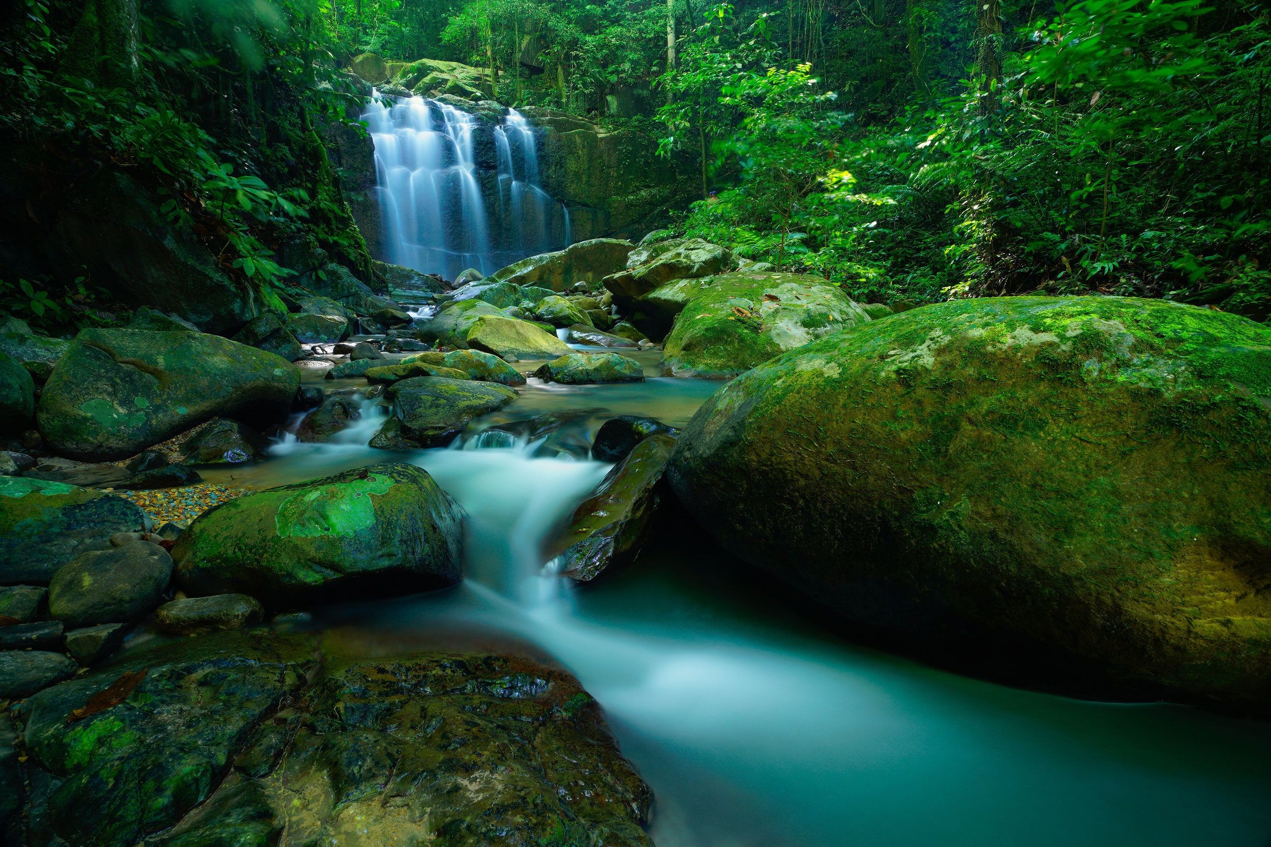 why the rainforest of the world Tropical forests cover a large part of the globe, but temperate rainforests only occur in few regions around the world temperate rainforests are.