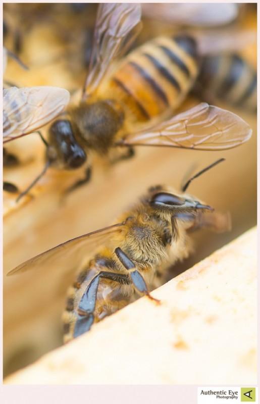 HoneyBeeNH