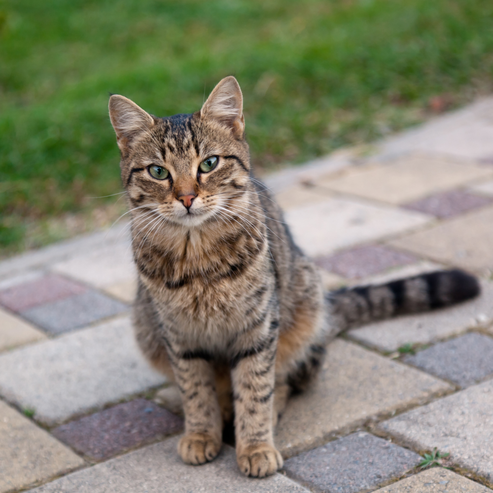 "My cat is getting on in years, the ENP Cat Glucosamine has her more active, hopping and prowling again. I highly recommend this product if you feel your cat may be experiencing discomfort.""  Tom Timmons, owner of Peanut in Colorado."
