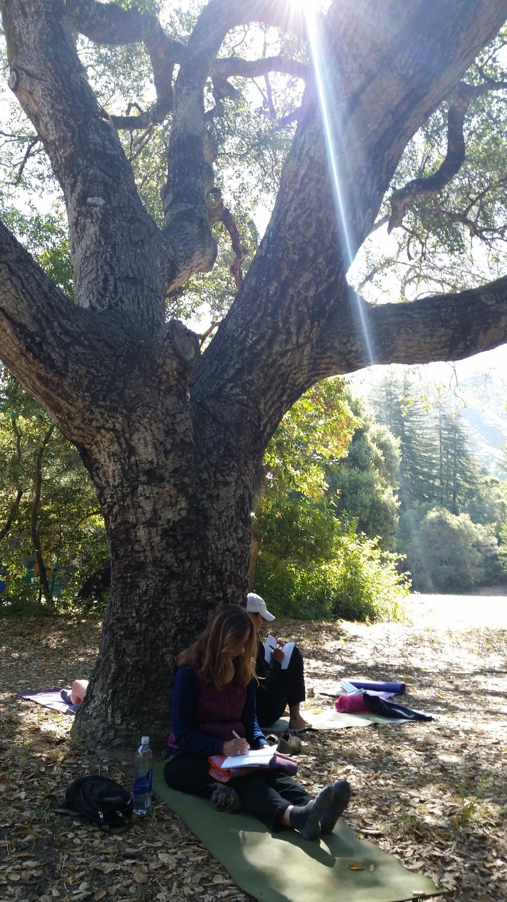 Elizabeth underneath the oak tree.