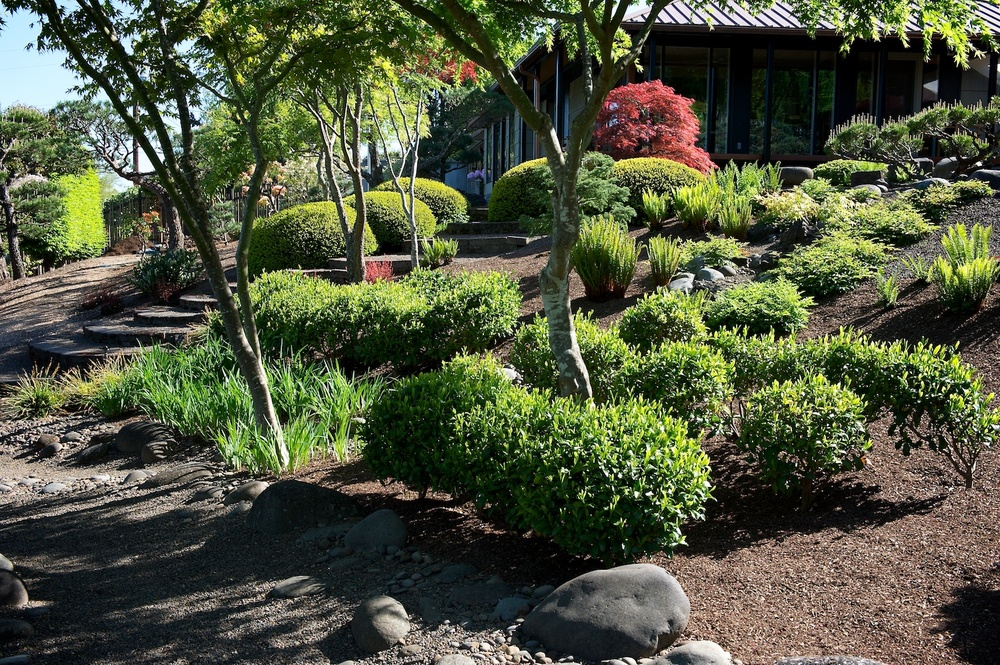 The east hillside has now become a garden of Japanese yews, Japanese maples, tea plants (Camellia sinensis), ferns, and astilbe.