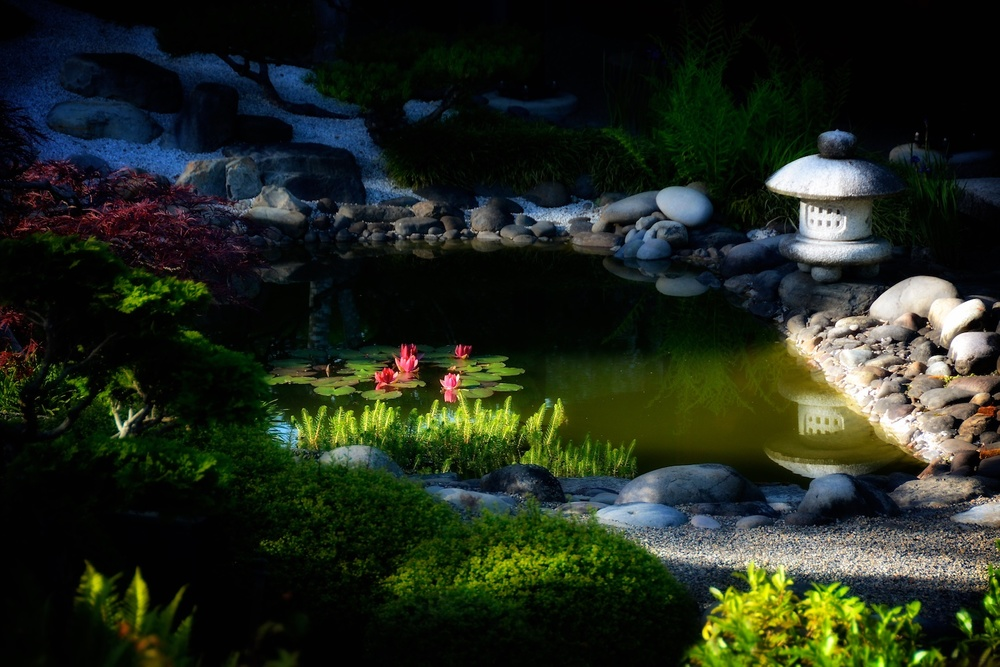 Spotlight on water lilies
