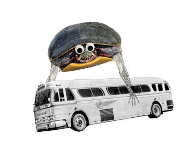 YFT Turtle