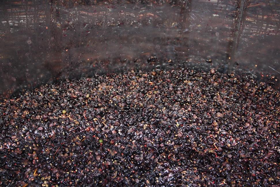 fermentingweb.jpg