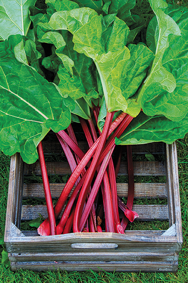 Box with rhubarb