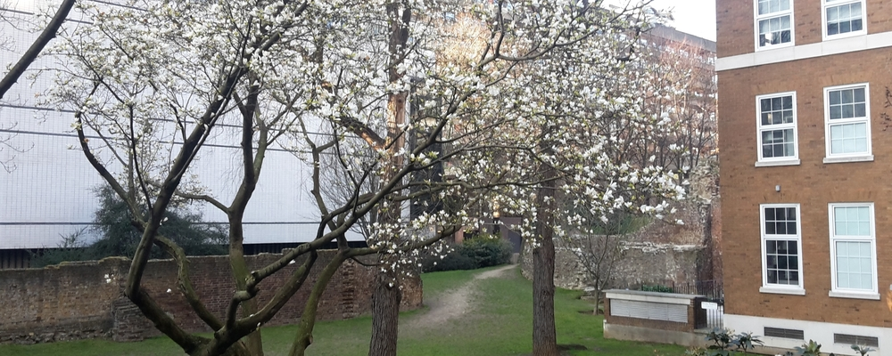 Spring blossom by the London Wall