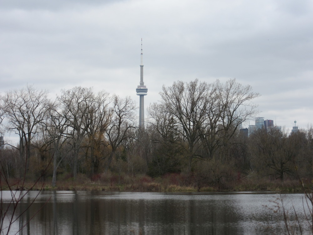 CN Tower from Toronto Islands
