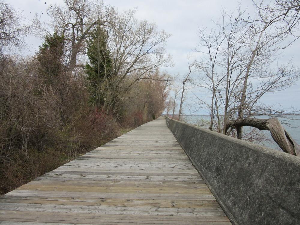 Peaceful boardwalk