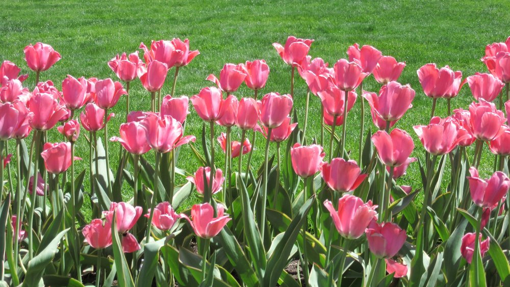 1_Public Garden_IMG_8475.JPG