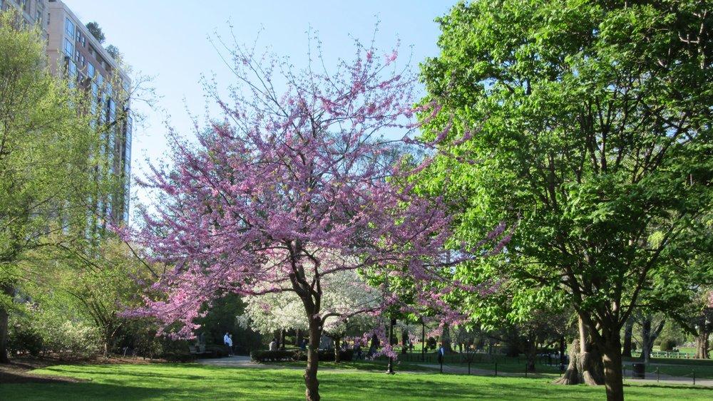 1_Public Garden_IMG_8562.JPG