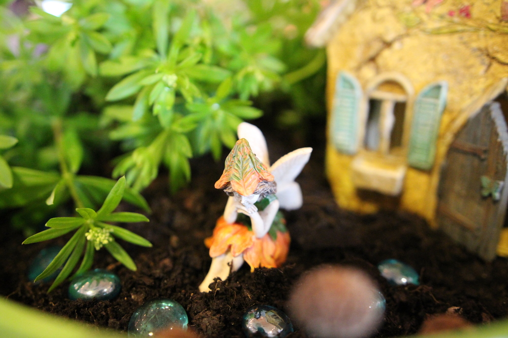 Fairy garden private classes