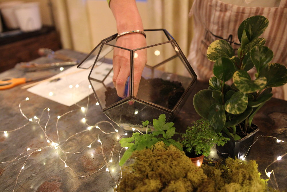 terrarium - DIY - indoor plants