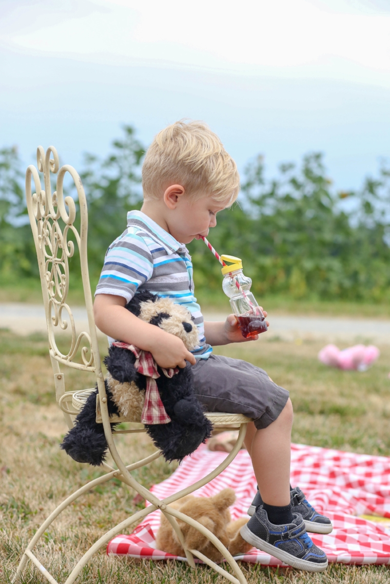 summer - picnic - teddy bear