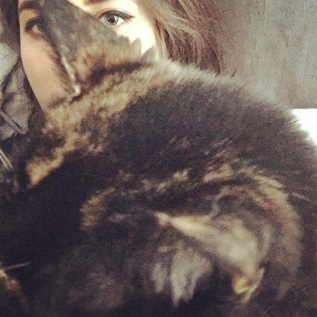 Spirit animal #cats #naps #lazy #meow