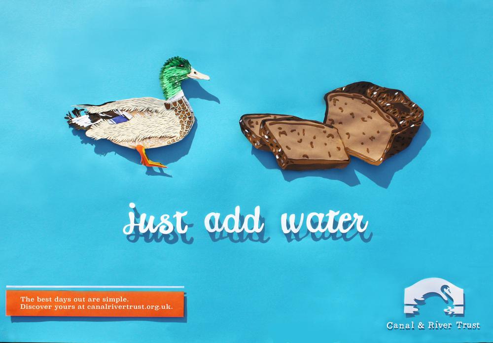duck -.jpg