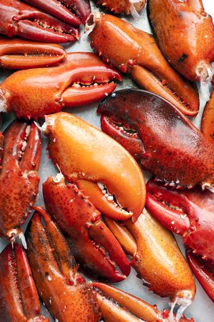 NEW ENGLAND KITCHEN Lobster Claws _MHT7008.jpg