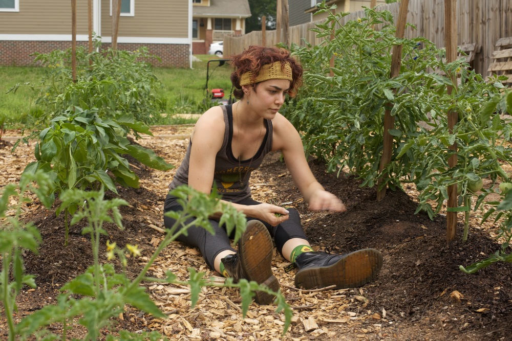 Andie inspects the tomato plants (avocado socks...nice)