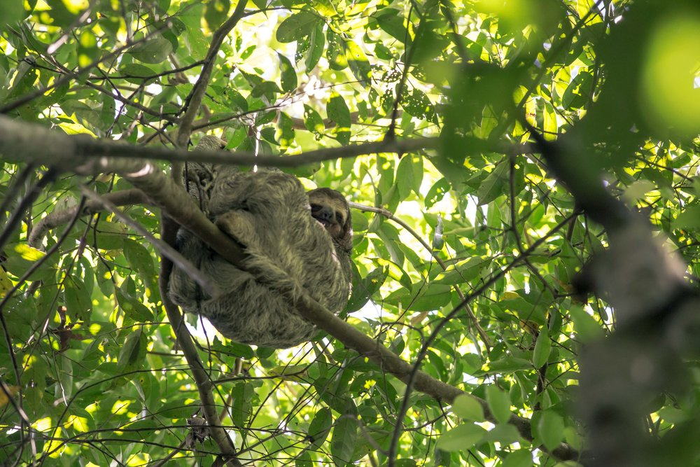 Costa Rica Wildlife14.jpg