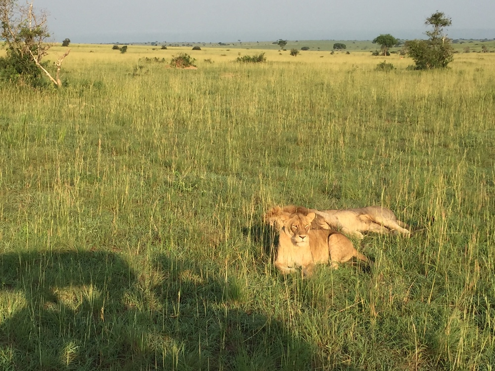 My point of reference for this entire safari was The Lion King.