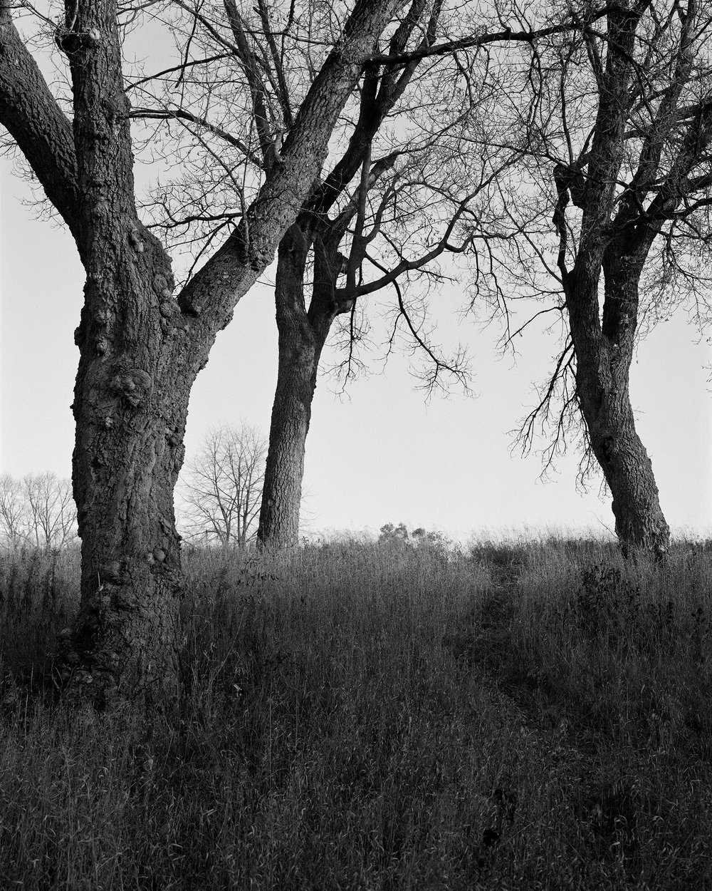 Powderhorn Park MN 2017.jpg