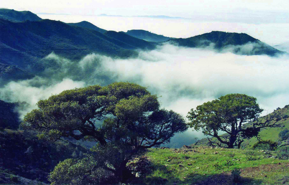 Mount Diablo is prime for greenery and sweet photos. So gorgeous .