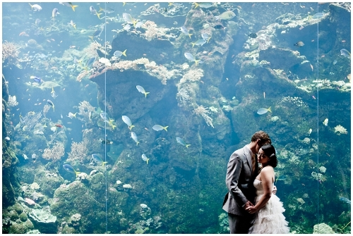How about some romantic shots next to the California Academy of Sciences fish? Or perhaps on top of the green dome?
