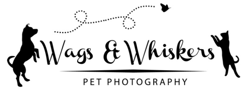 Wags & Whiskers Pet Photo