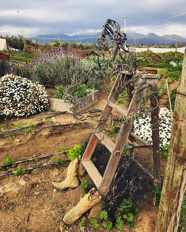 These boots *were* made for walking... #valledeguadalupe #fincaaltozano