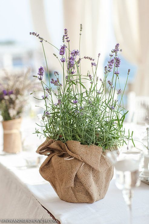 Lavender with Burlap.jpg