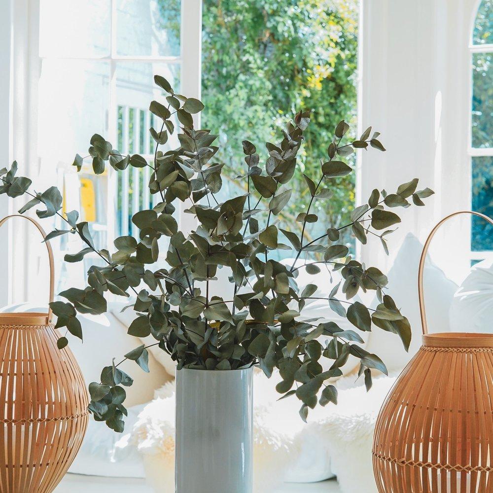 eucalyptus 2.jpg